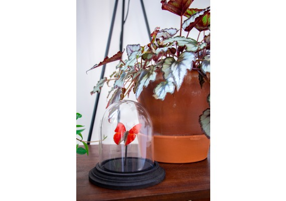 Bell jar with red butterfly