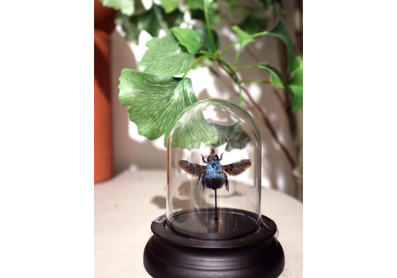 Bell jar with blue bee
